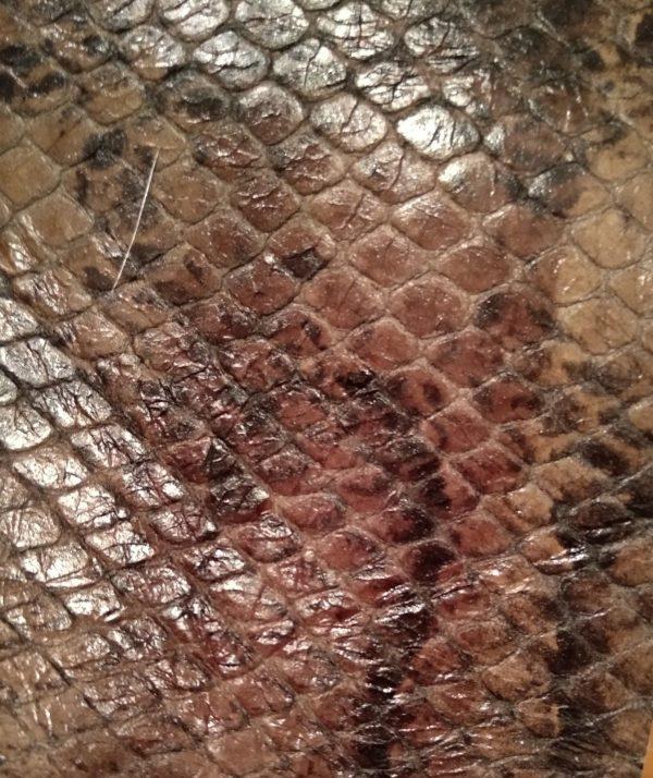 Piel print serpiente marron